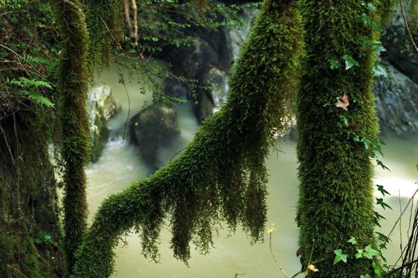 Grotte del Bussento, meraviglie scolpite dal fiume