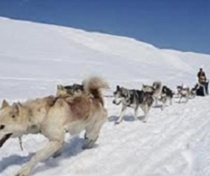 Passo del Tonale, sleddog, neve ed escursioni in bici