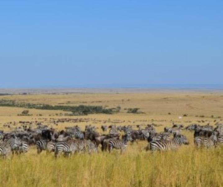 Safari in Sudafrica, un viaggio emozionante come pochi