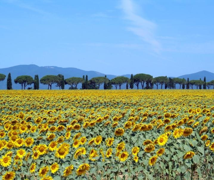 La Maremma Toscana: tra storia e natura